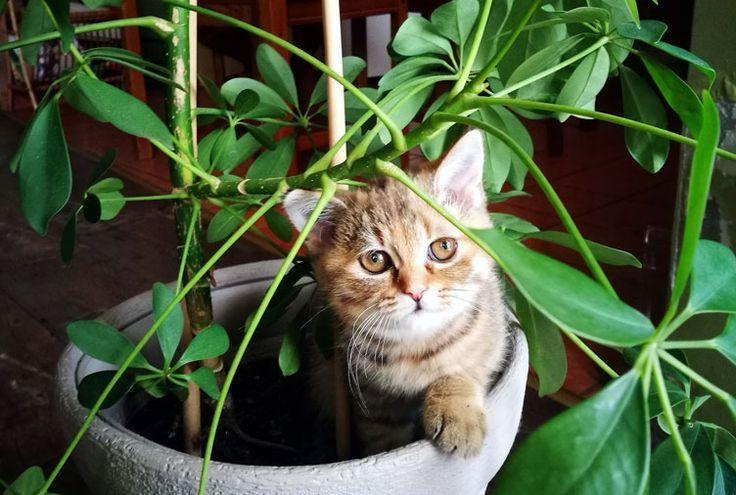 безопасни растения за домашни любимци