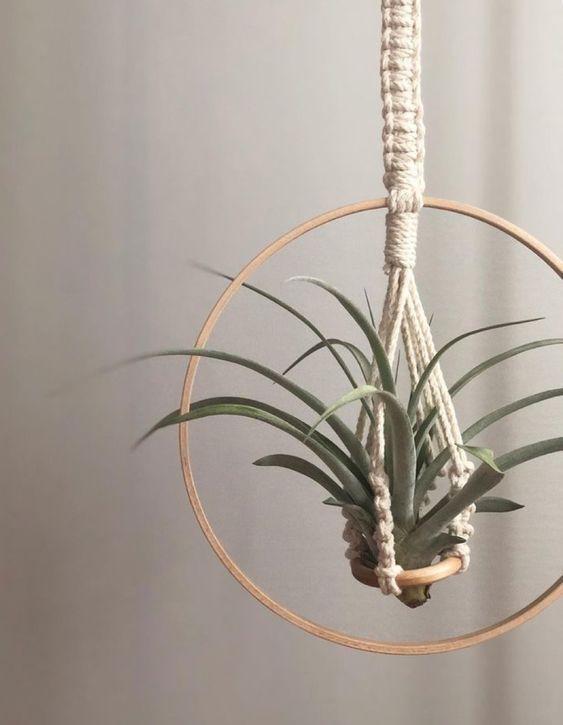 въздушно растение